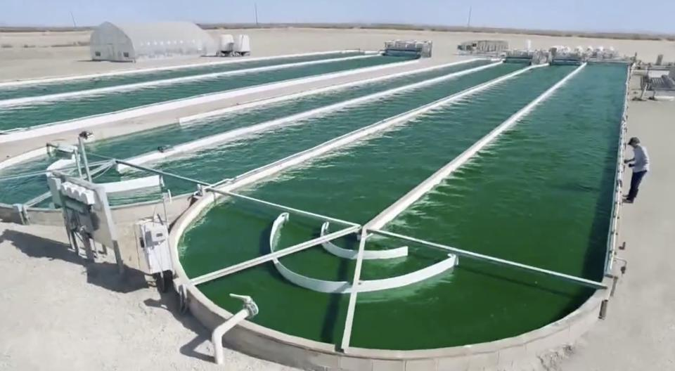 An industrial algae pond for production of biofuels