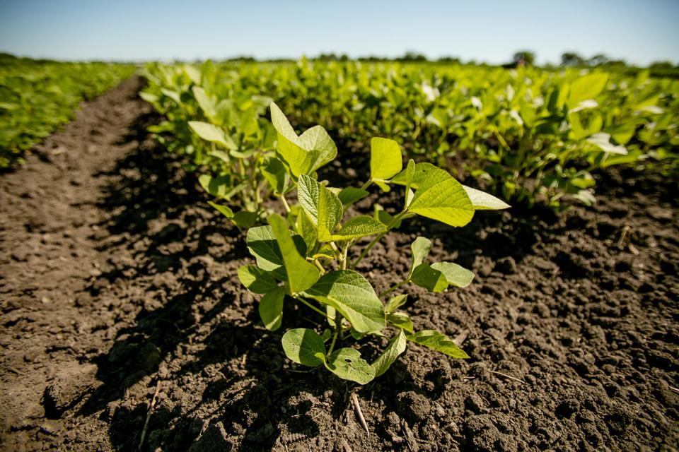 soybean, crops, university of illinois