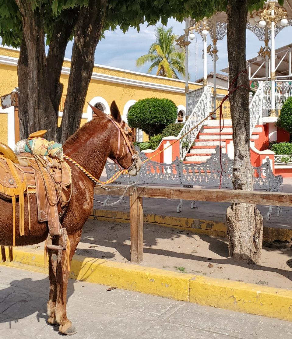 horse with leather saddle in la noria