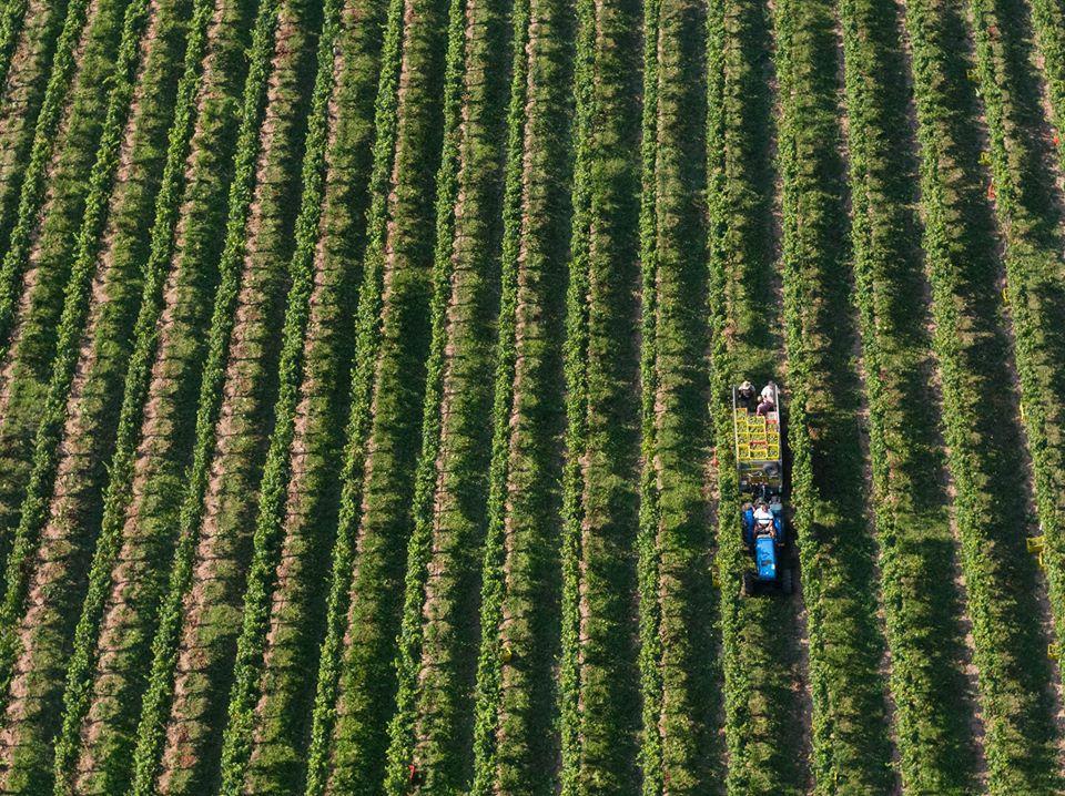 Mirabella Vineyards