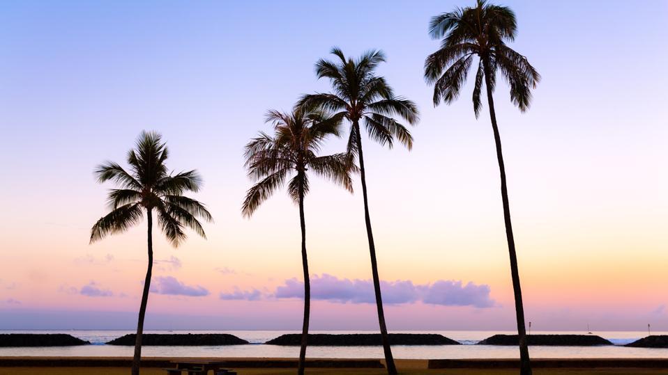 Palm Trees, Waikiki Beach, Honolulu, Oahu, Hawaii, America