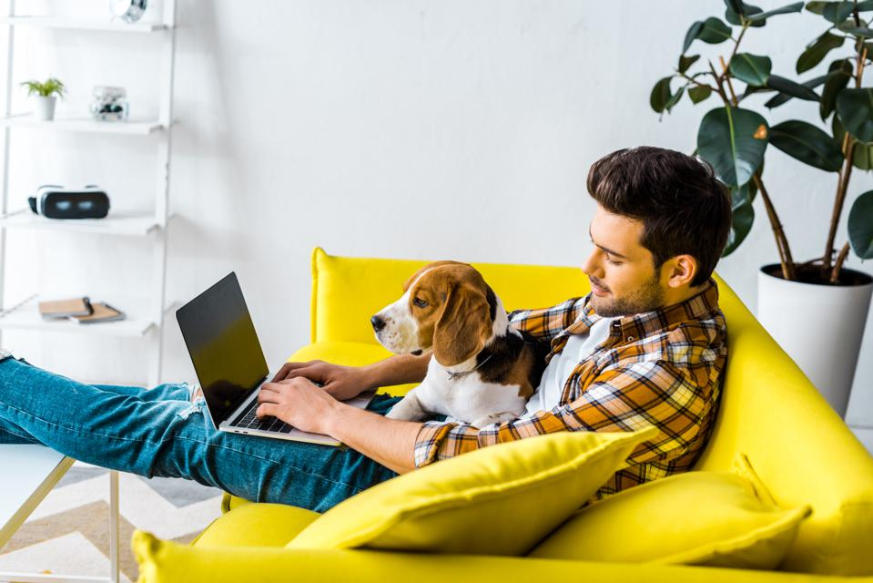 handsome man using laptop on yellow sofa with beagle dog