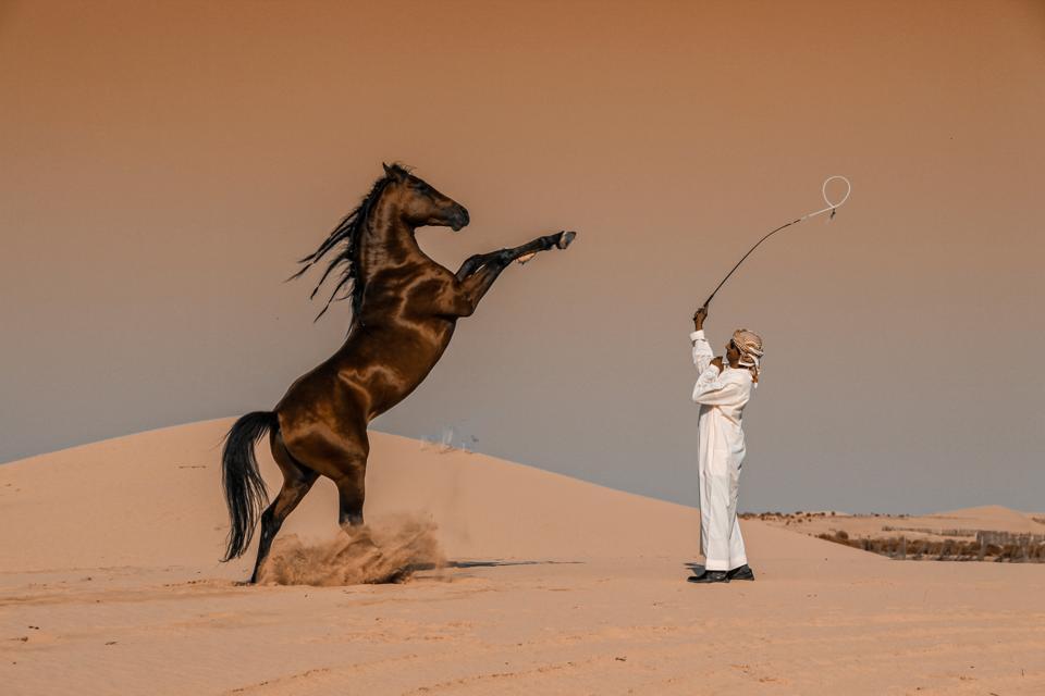 Abu Dhabi horse