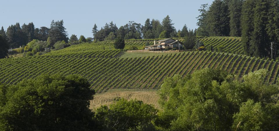 Freestone Hill Vineyard, Russian River Valley, source of Pinot Noir
