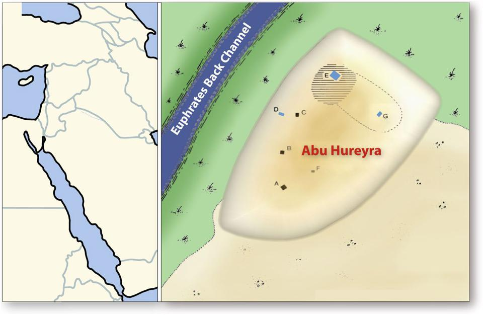 Location of Abu Hureyra showing Abu Hureyra location in Syria (left) and (right) showing locations of excavation trenches.