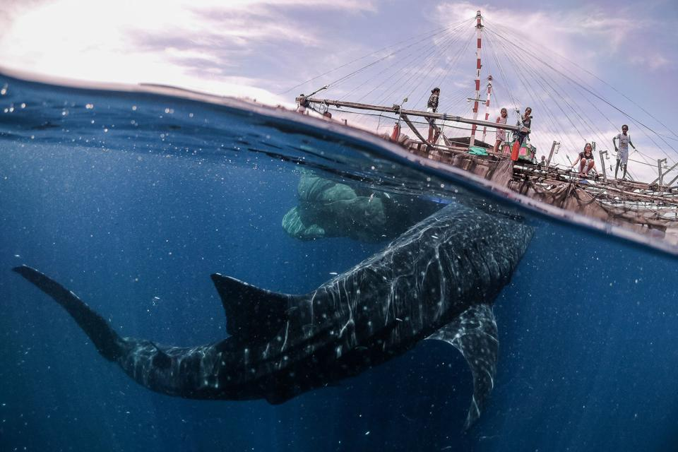Fishing boat's close encounter with a friendly whale shark
