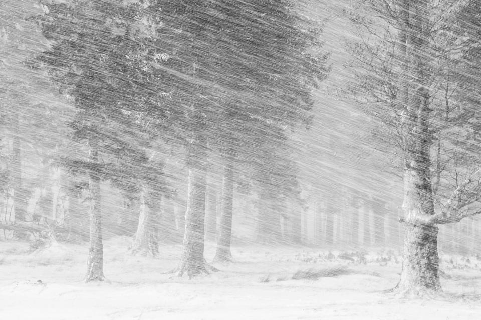 Trees battered in a blizzard