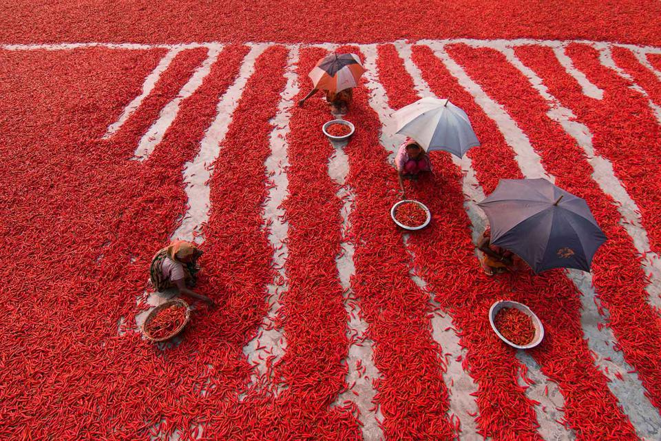 Red chili peppers surround workers in Bangladesh