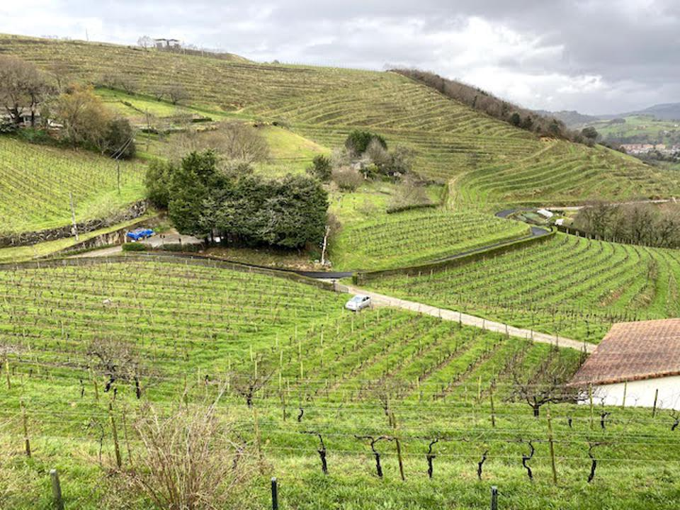 View of the family vineyard
