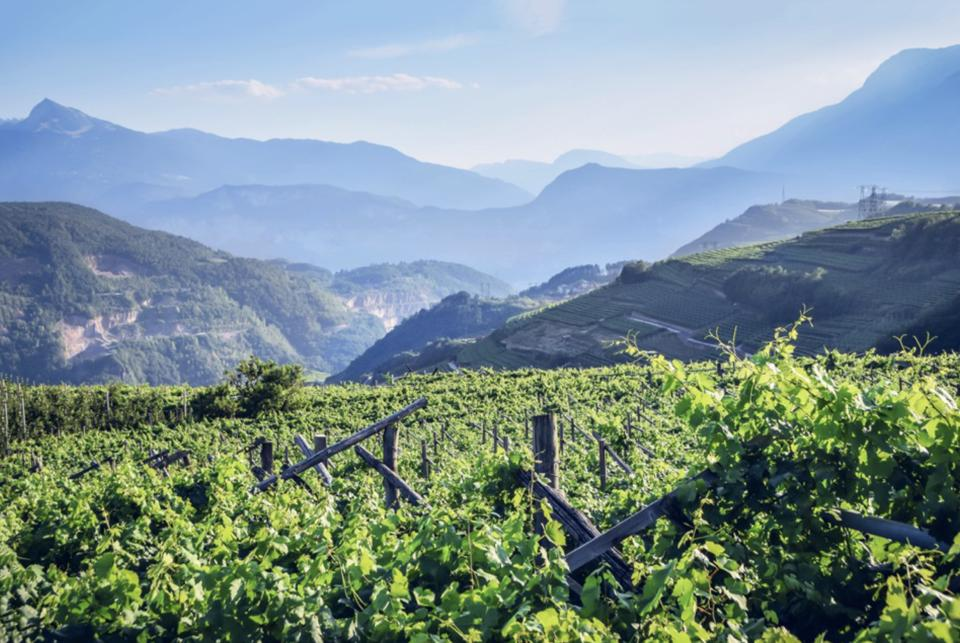 The Trento region in northeast Italy produces sparkling wines of the mountains
