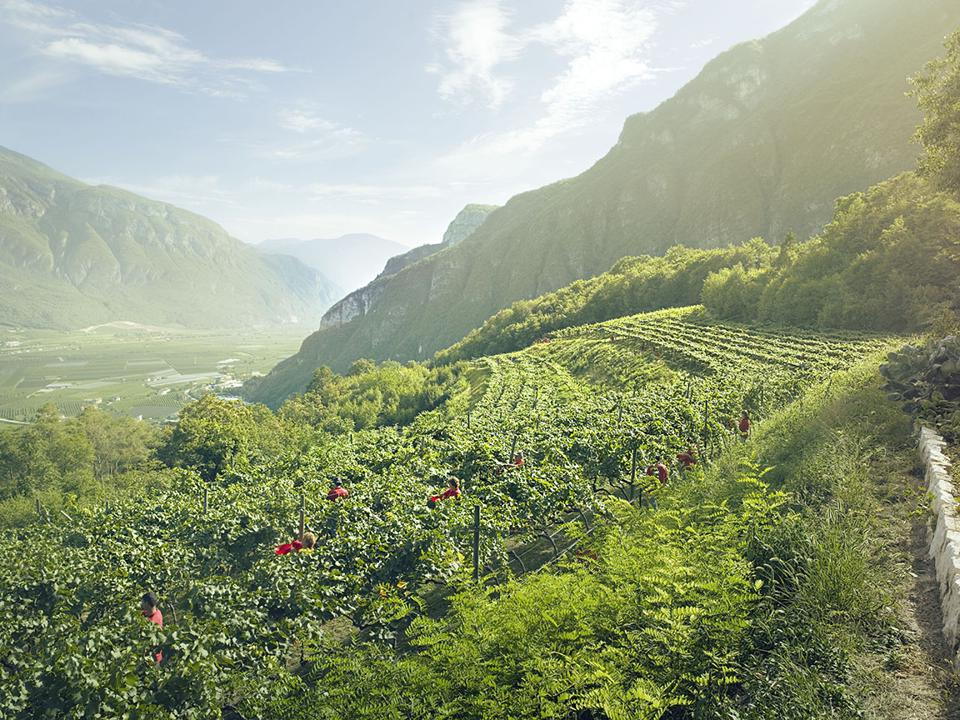 Ferrari produces sparkling wines from the Dolomite mountains.