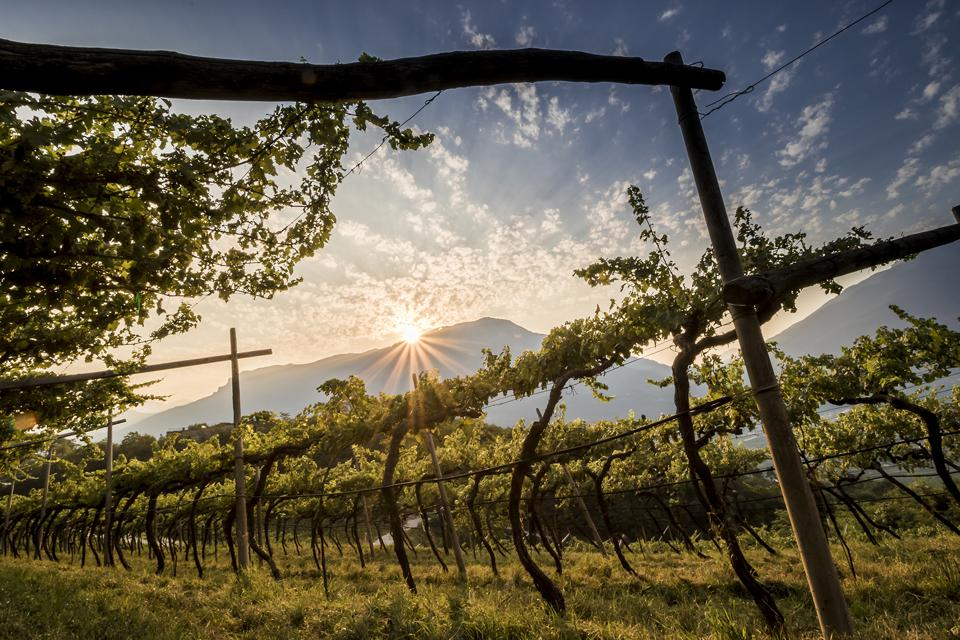 Ferrari is a historic producer of sparkling wines in Italy's TrentoDOC region