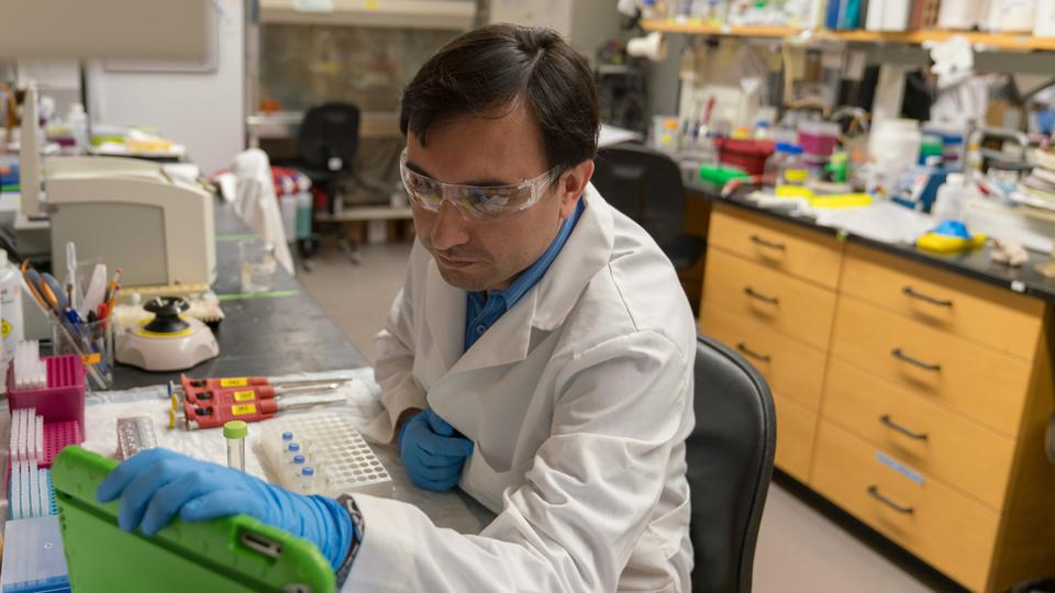 Colombian scientist Javier Jaimes preparing some samples for processing at the Gary Whittaker laboratory, College of Veterinary Medicine, Cornell University in 2018.