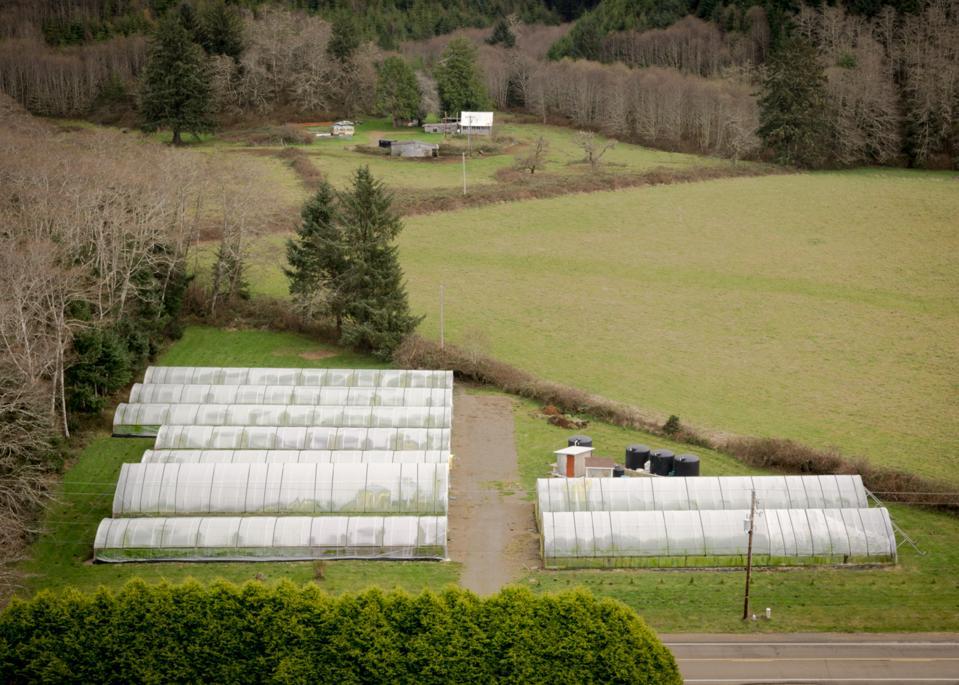 Oregon Coast Wasabi's greenhouses