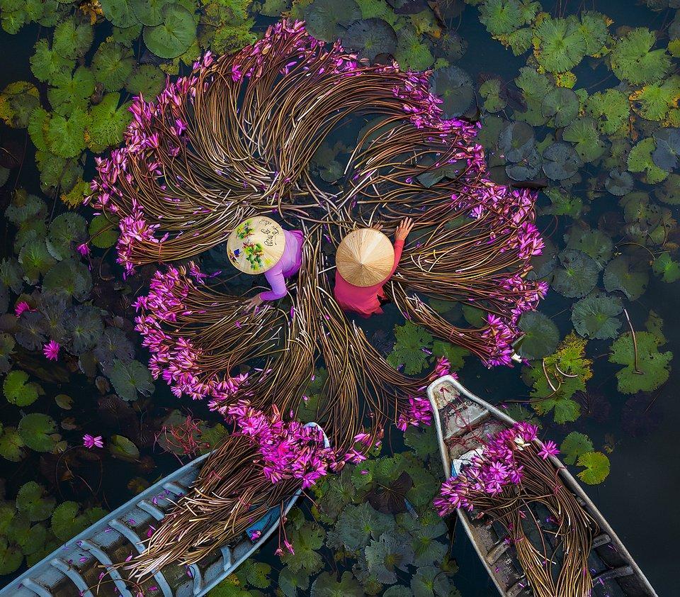 women washing purple water lilies in Vietnam