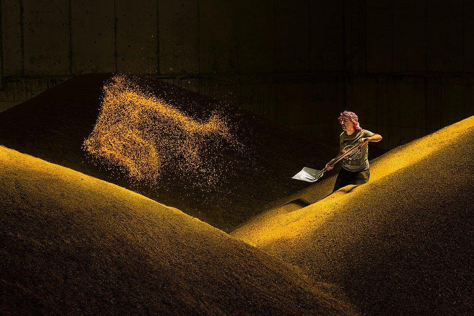 Worker shoveling golden grain in Turkey