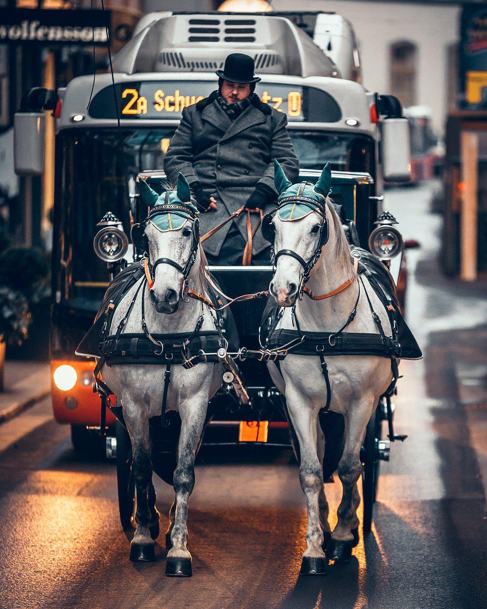Viennese horses hard at work