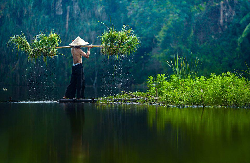 Indonesian farmer collecting plants