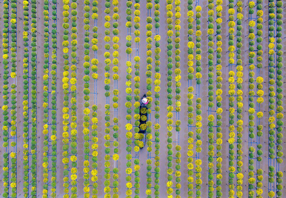Vietnamese farmers growing flowers