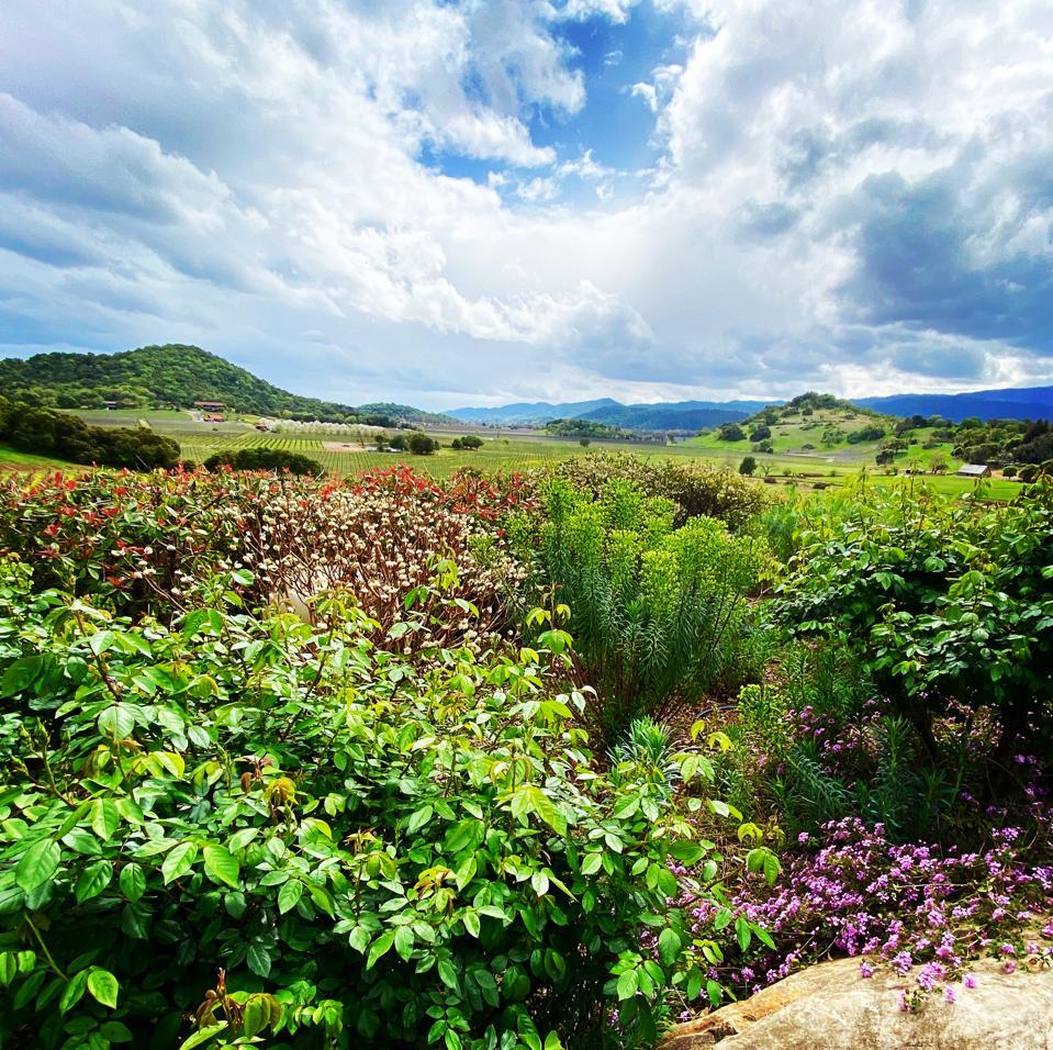 Gargiulo Vineyards, Oakville, Napa Valley
