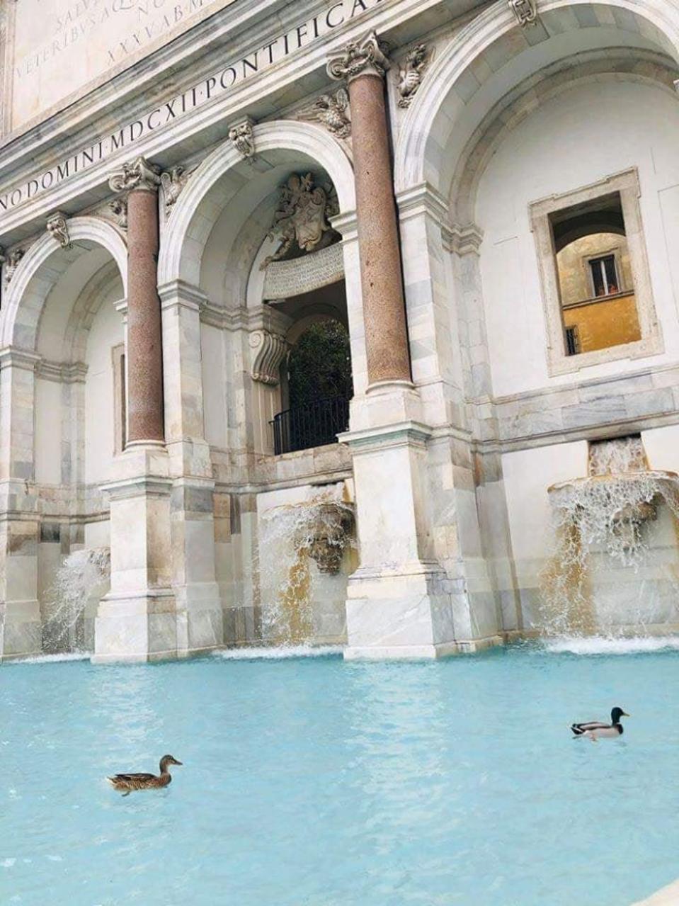 Ducks swimming in the Trevi Fountain.