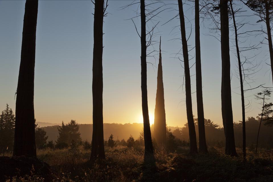 Spire, by Andy Goldsworthy. Courtesy of the Presidio Trust. Photo: Jay Graham.