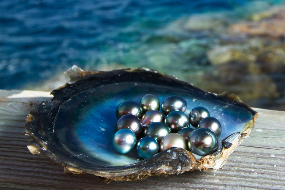 Kamoka pearls are sustainably cultivated on the South Pacific atoll of Ahe.