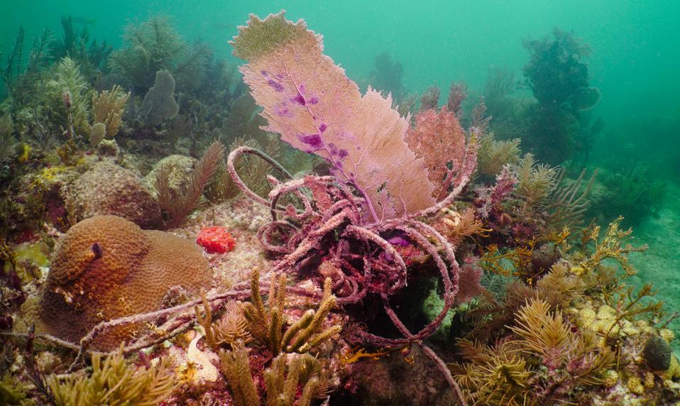 marine debris, underwater
