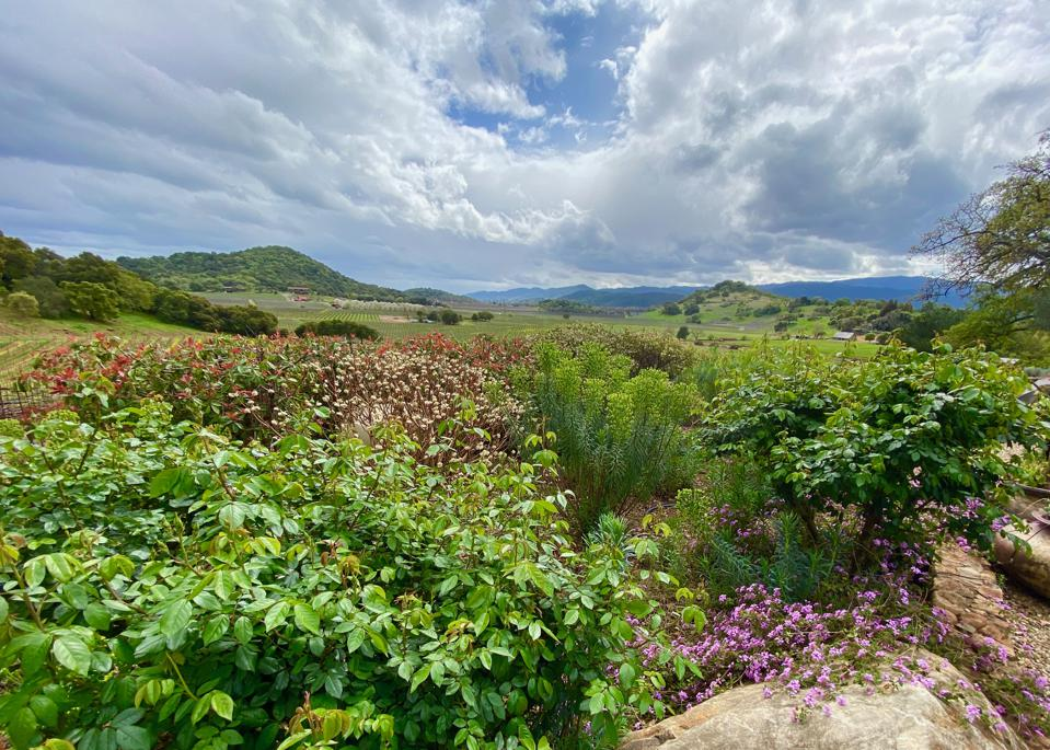 beauty trends View from Gargiulo winery in Oakville, Napa Valley, California
