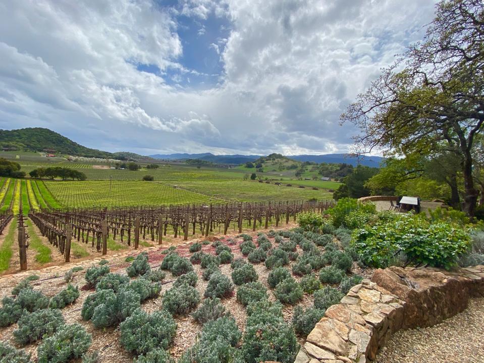 beauty trends Vines at Gargiulo Vineyards, Oakville, Napa Valley, California
