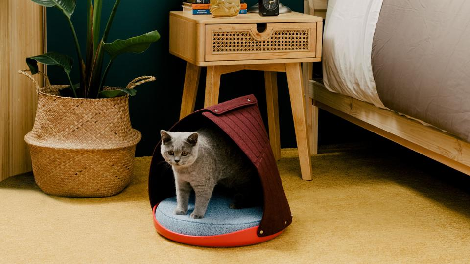 A grey cat in a multicolored cat bed designed for the Cat Person website.