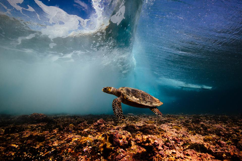 A turtle drifts below the waves.