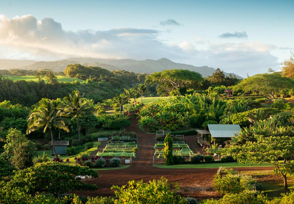 Kukui'ula on Kauai features a 10-acre upcountry organic farm that grows a wide variety of fruits, vegetables, herbs and flowers—all available on a complimentary basis for members and guests of the property.