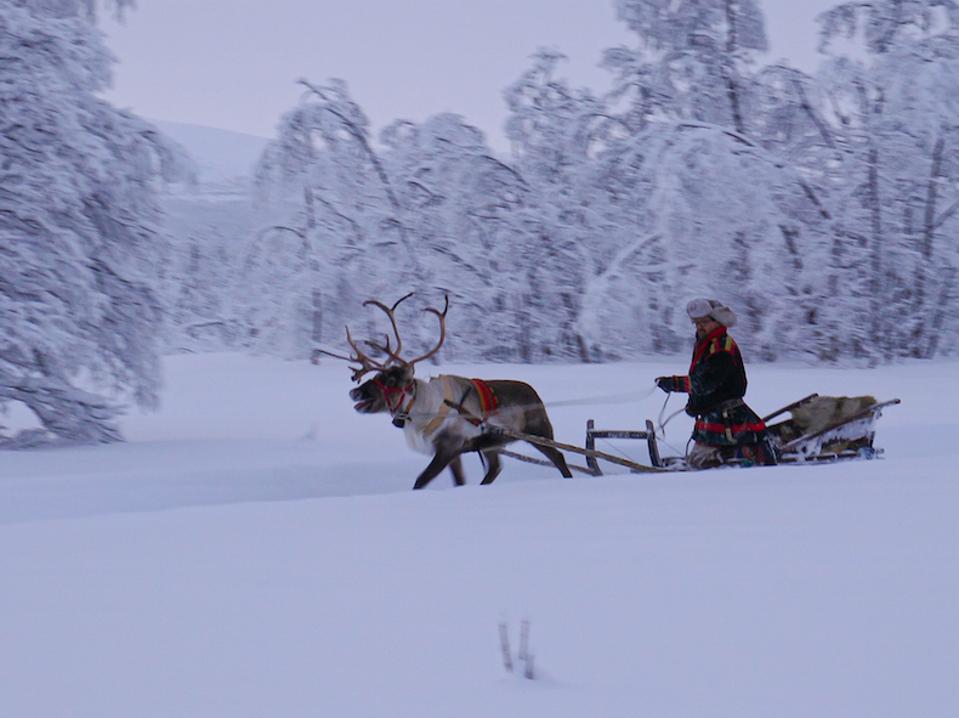 Reindeer sledding in Swedish Lapland.