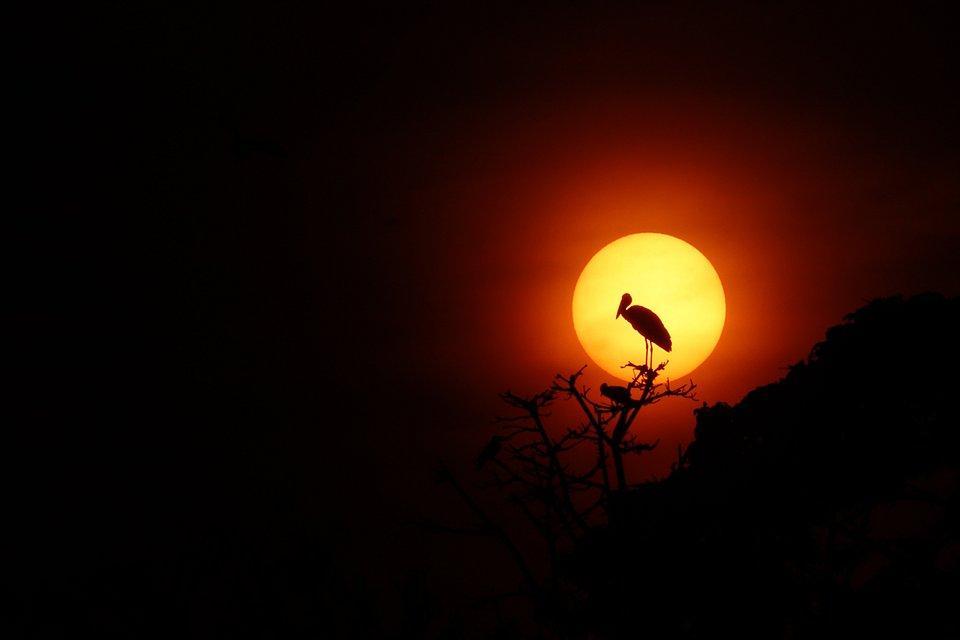 Stork at sundown