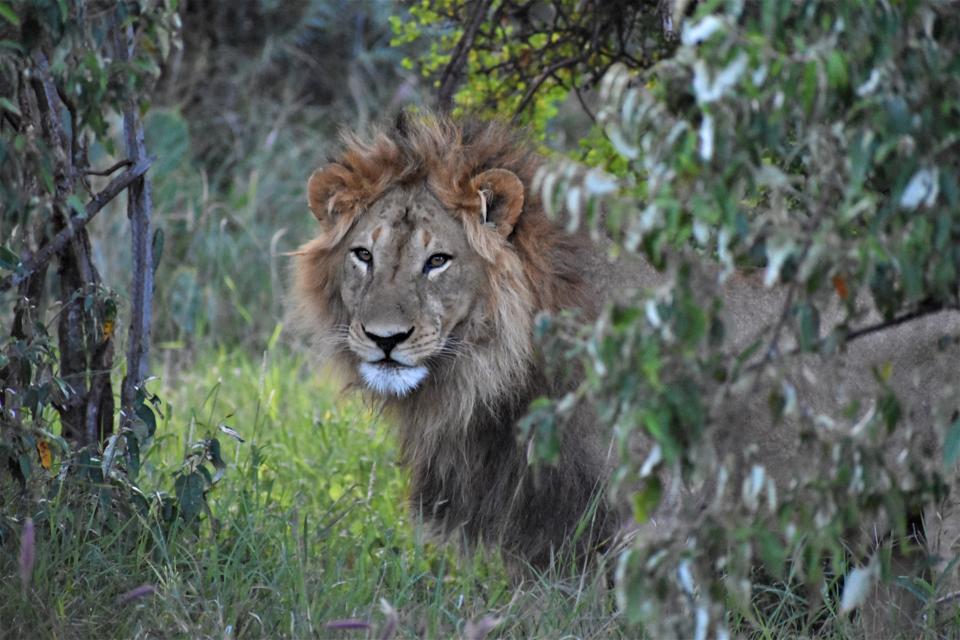 Loisaba Wildlife Conservancy