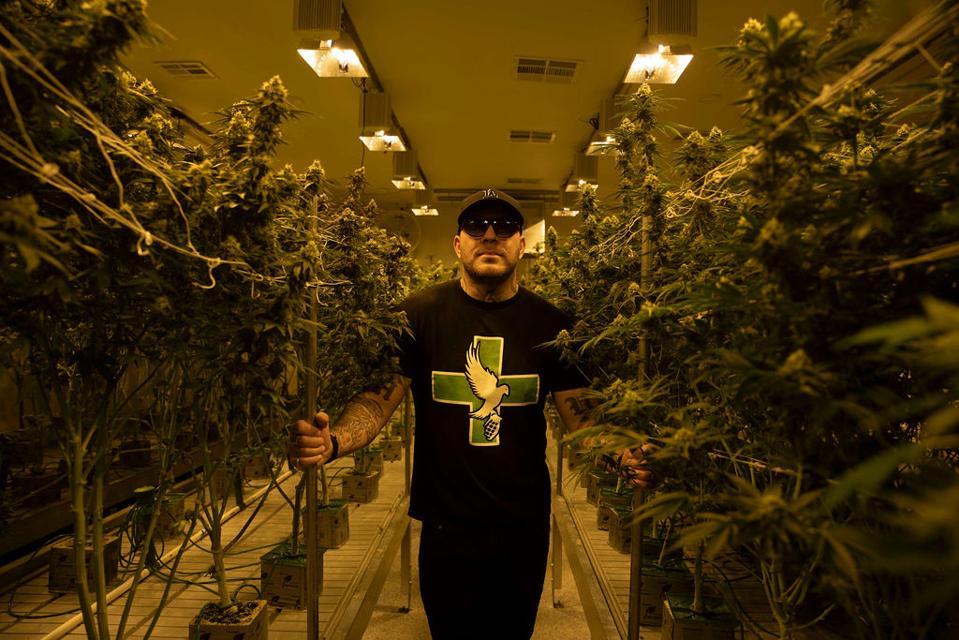 some beautiful nugs of craft cannabis