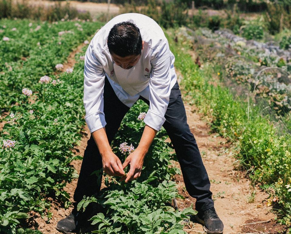Chef Rodrigo Acuña Bravo in his vegetable and herb garden