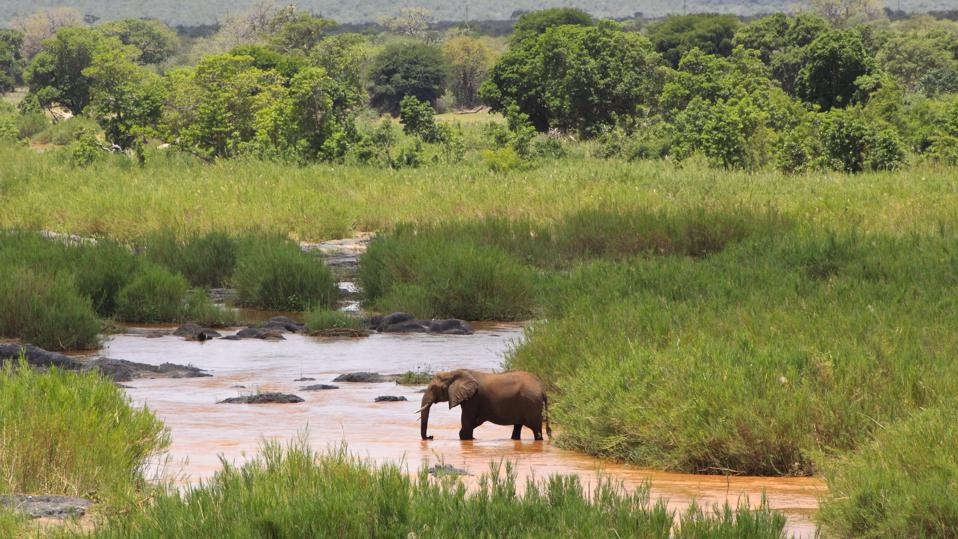 Elephant on the Olifants River