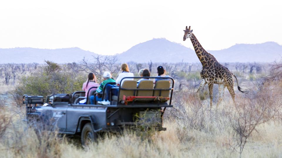 Safari vehicle with tourists taking pictures of wild Africa Giraffe