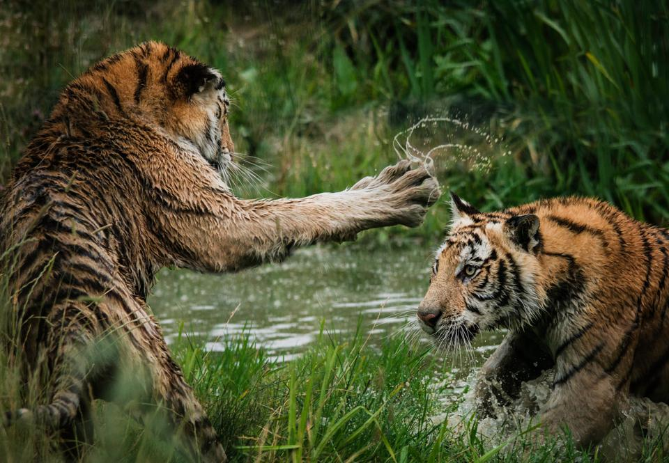 family business, entitlement, sibling rivalry, tiger king