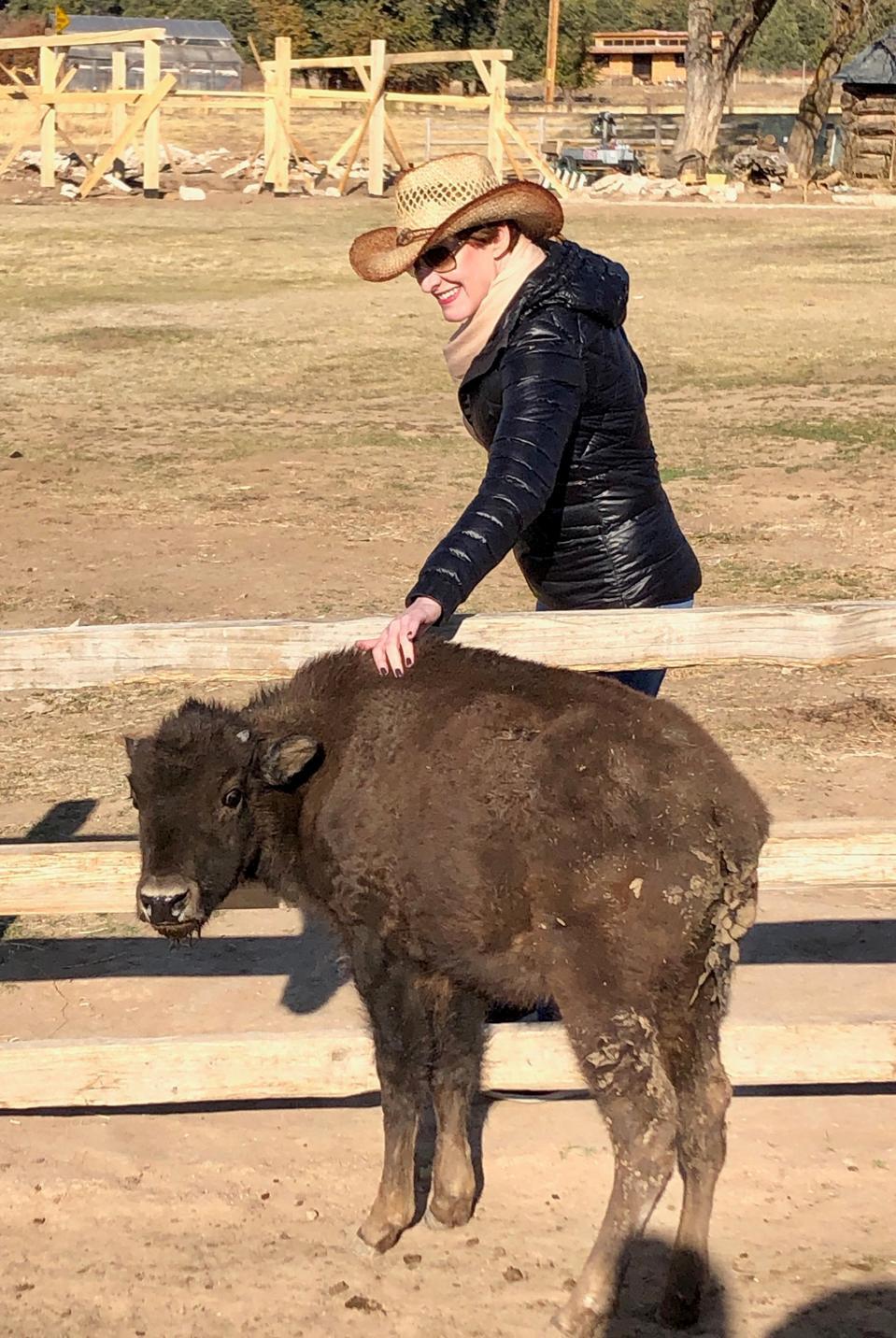 Hewan peliharaan panjang adalah bison bayi di sebuah peternakan di Utah.