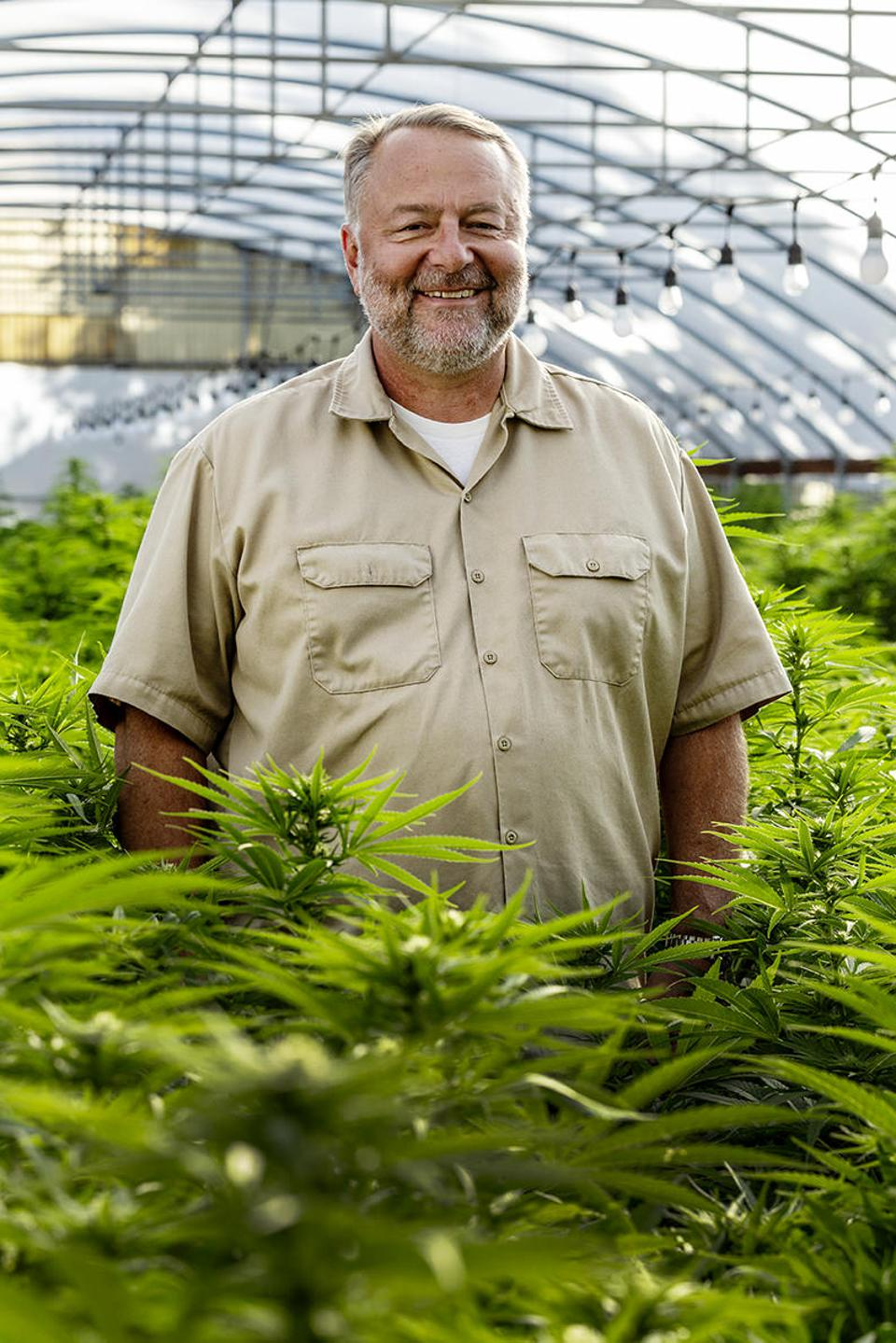 man in a greenhouse surrounded by vibrant green cannabis plants
