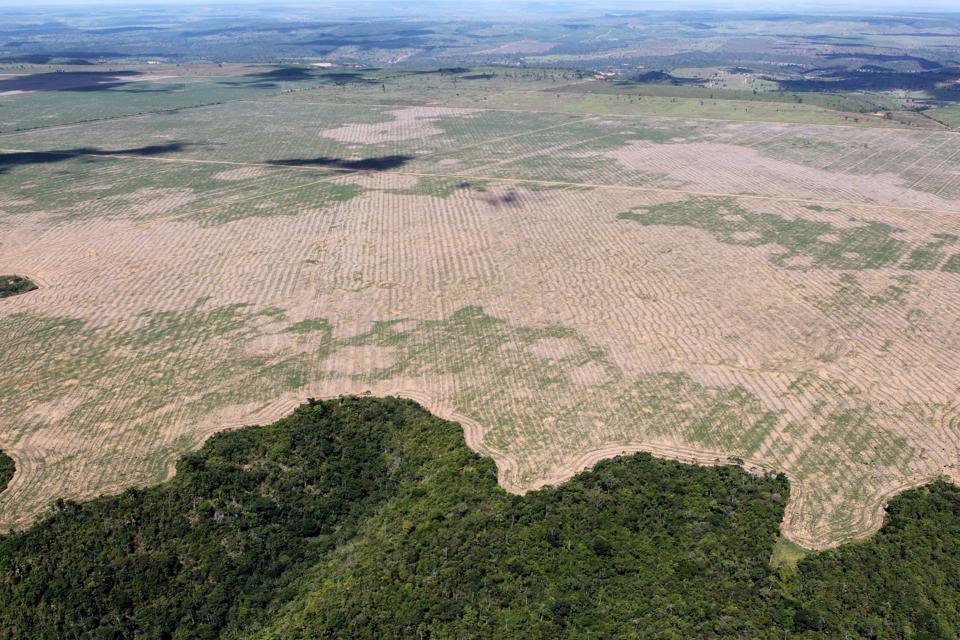 Photo of Amazon rainforest deforestation