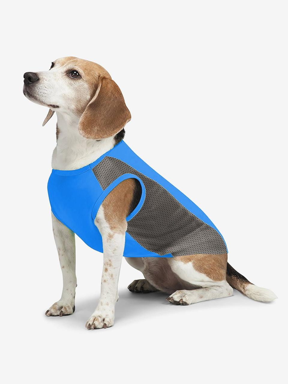 Insect Shield dog vest