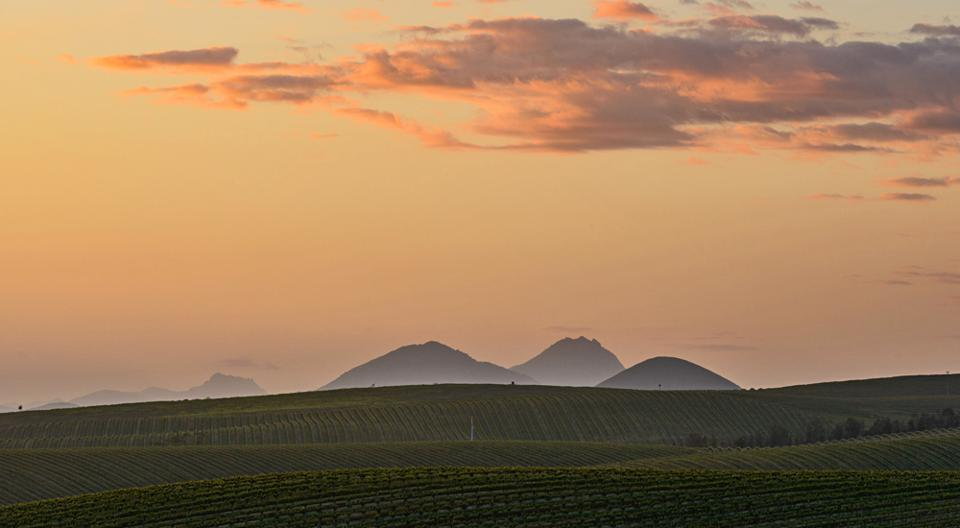 Tolosa Poletti Vineyard as dusk settles for the day.