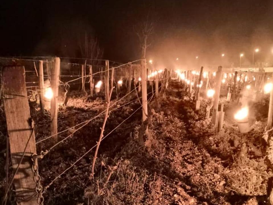 candles in the vineyard, Burgundy vineyard, frost, Bourgogne, Chablis, coronavirus
