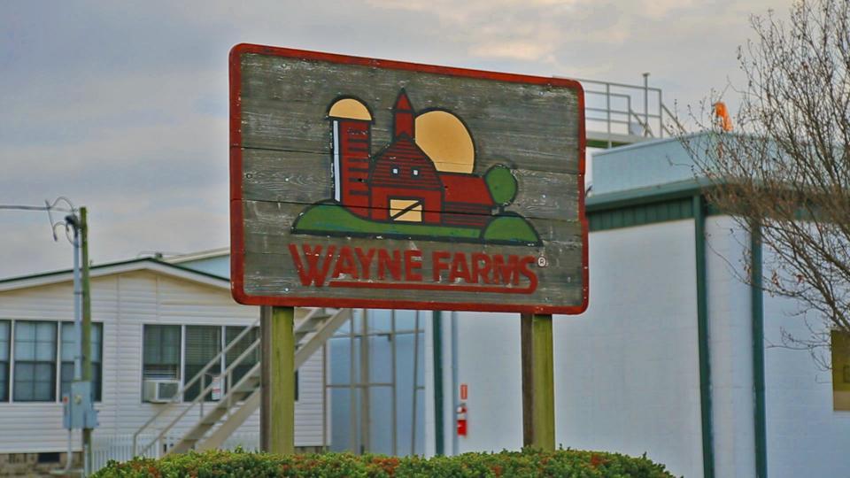 A Wayne Farms sign near the entrance to a plant.