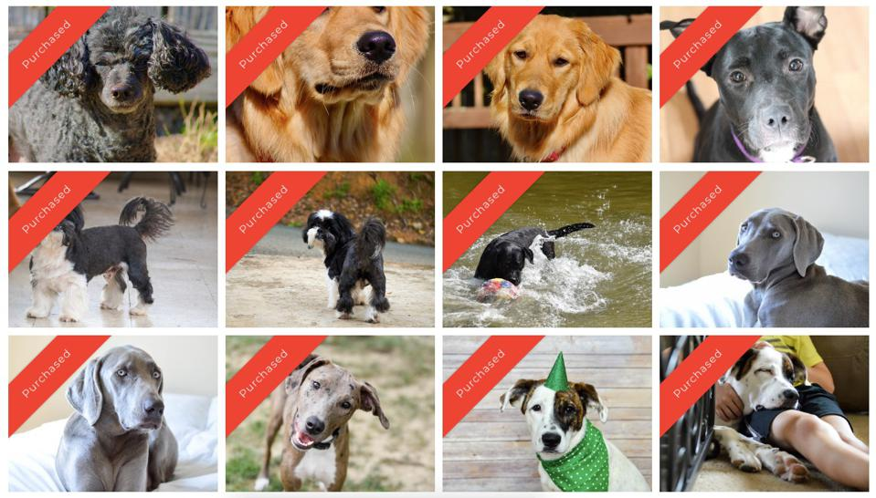 BarkYard used BYLINED for its ″Good Dogs Deserve Great Lawns″ campaign.
