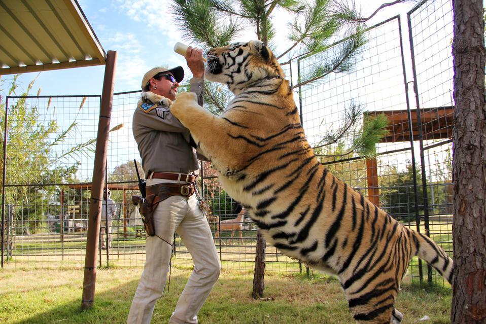 Tiger King, Tiger King Netflix, Joe Exotic, Carole Baskin, Big Cat Rescue, Tigers, Big Cat Welfare, Blackfish, Tiger King article, Netflix